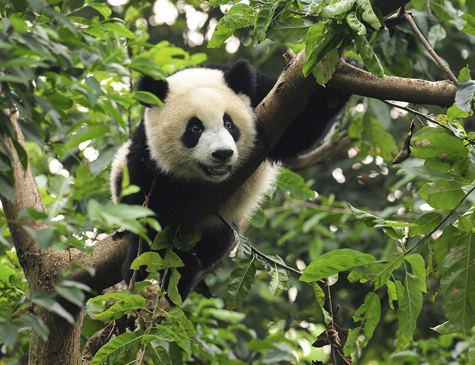Smithsonian National Zoological Park - Washington, DC